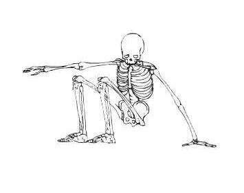 esqueletocostado
